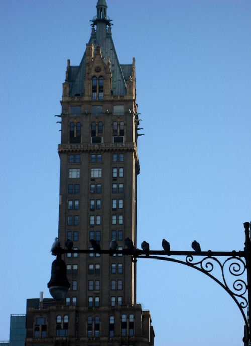 Photo of pigeons on a lamp post against NY skyline taken by Joana Miranda