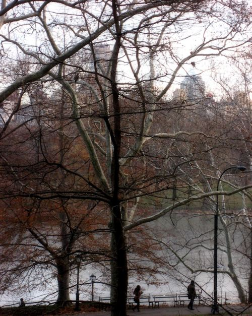 Photo of wintry Central Park scene taken by Joana Miranda