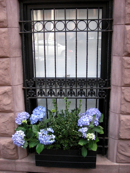 Photo of flower box at Upper West Side brownstone, taken by Joana Miranda