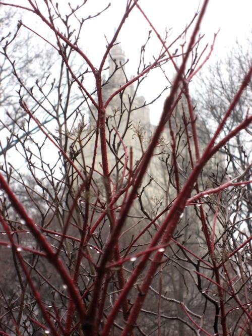 Photo of red branches in the rain, taken by Joana Miranda