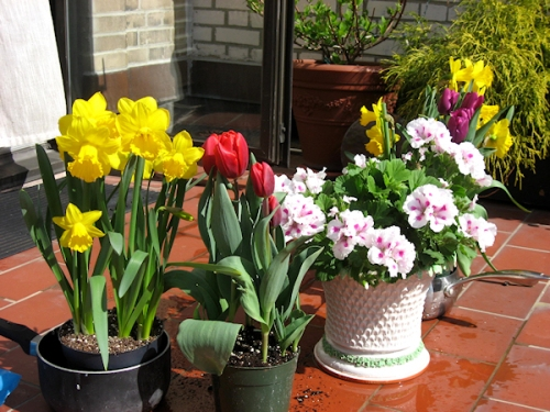 Photo of pots of spring flowers on terracotta terrace, taken by Joana Miranda