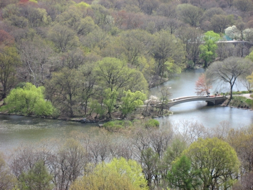 Photo looking east into Central Park, taken by Joana Miranda