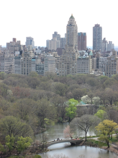 View from the Oliver Cromwell building looking east into Central Park, photo taken by Joana Miranda