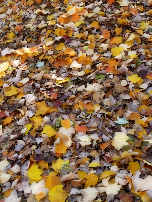 Photo of fall leaves in Central Park, taken by Joana Miranda