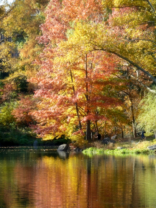 Photo of fall trees reflected in pond in Central Park, taken by Joana Miranda