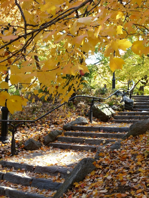 Photo of stone steps in Central Park in the fall, taken by Joana Miranda