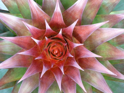 "Photo of cactus ""flower"", taken by Joana Miranda"