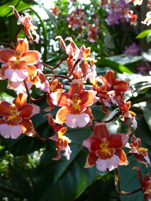Photo of delicate sprig of pink and orange orchids, taken by Joana Miranda