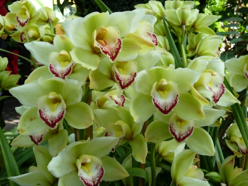 Photo of lime green sprigs of orchids, taken by Joana Miranda