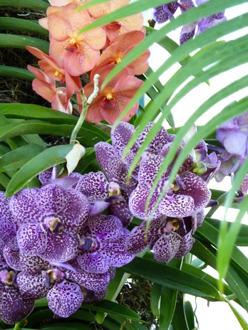 Photo of spotted purple orchids, taken by Joana Miranda