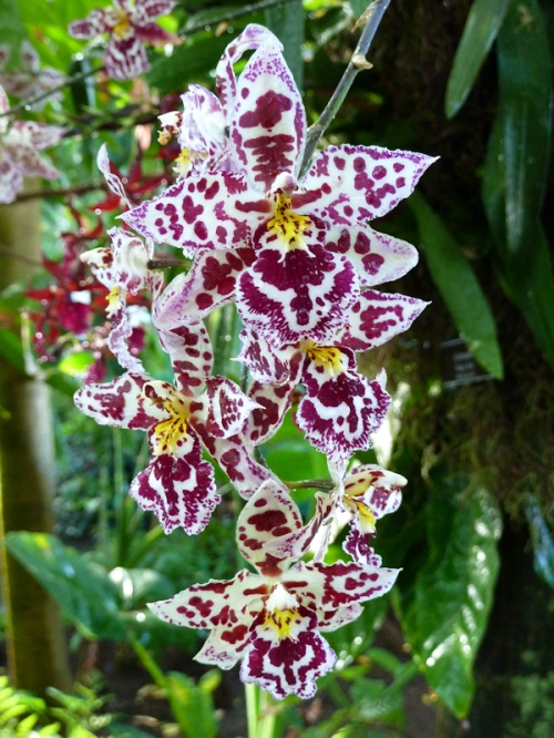 Photo of exotic wine red and yellow orchids, taken by Joana Miranda