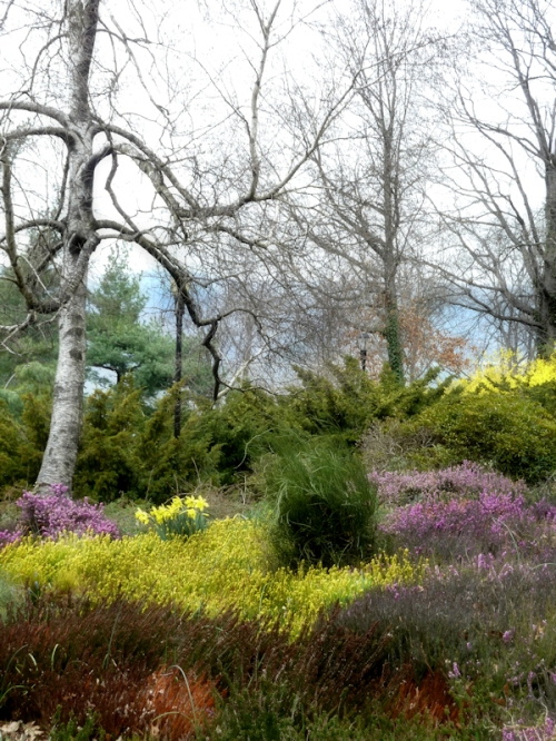 Photo of spring meadow at Fort Tryon Park, taken by Joana Miranda