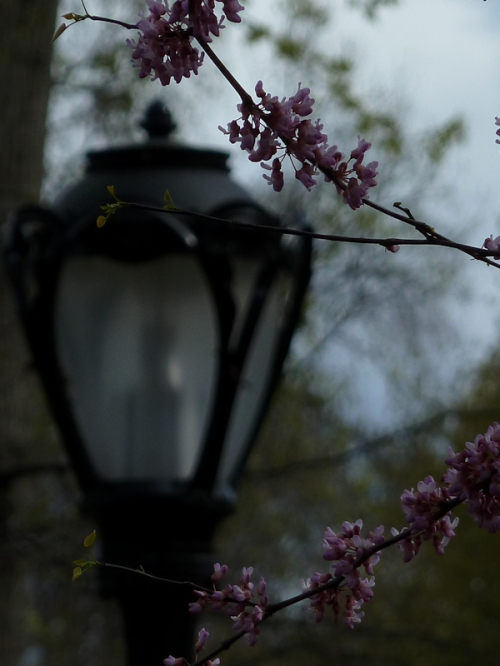 Photo of lamp post in spring time in Central Park, taken by Joana Miranda
