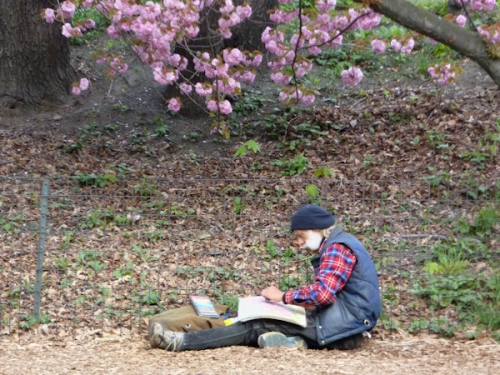 Photo of man sketching under a flowering cherry tree in Central Park, taken by Joana Miranda
