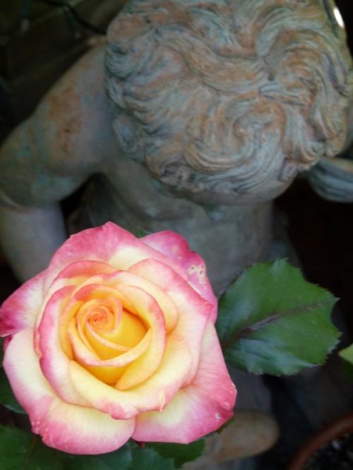 Photo of stone cupid statue and rose, taken by Joana Miranda