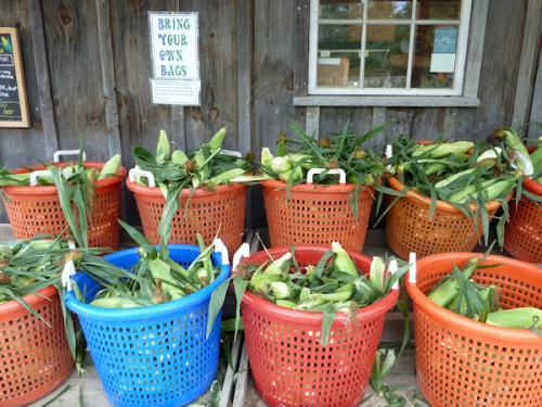 Buckets of fresh farm-grown corn on the cob at Killdeer Farm Stand, VT; photo by Joana Miranda