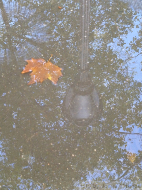 Photo of lamppost reflected in a puddle, taken by Joana Miranda