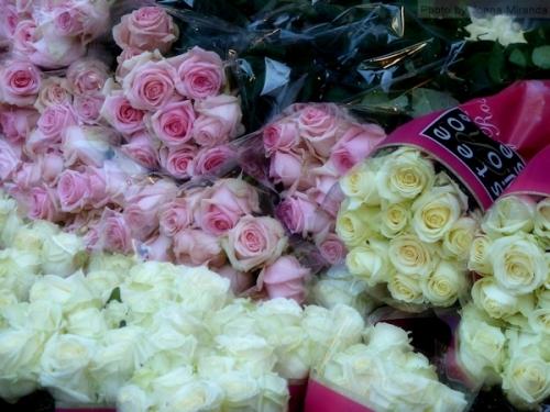 roses in Copenhagen
