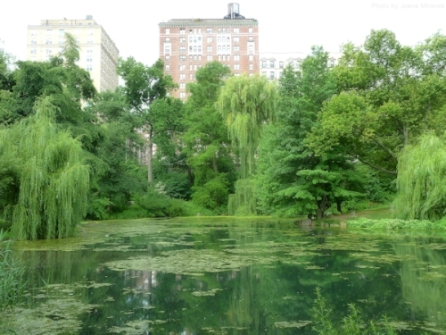 pond and buildings