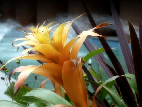 orange tropic flower near fountain