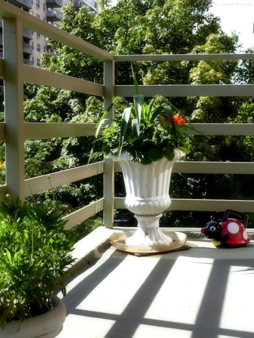 ladybug watering can