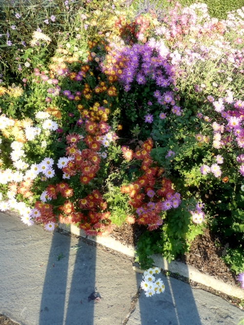 shadows in a garden