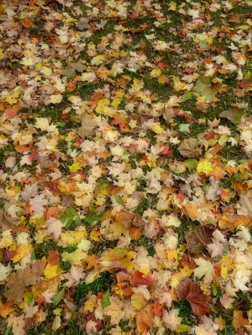 yellow carpet of leaves