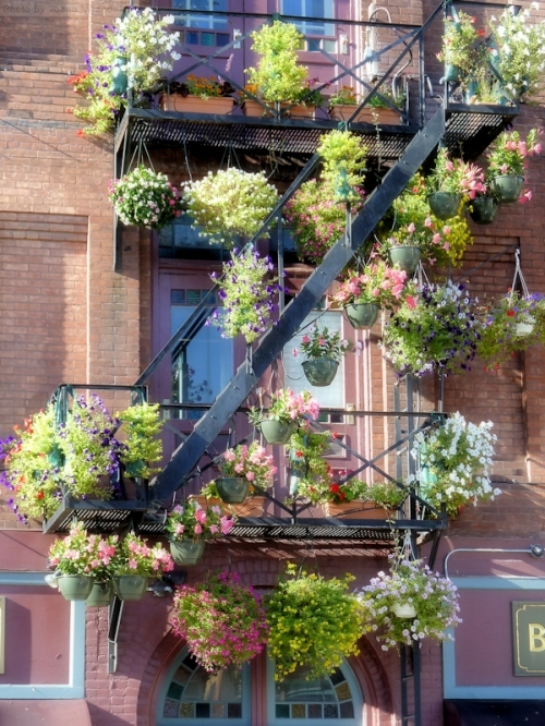 multiple hanging flower baskets