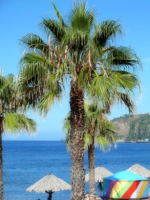 Madeira beach umbrellas