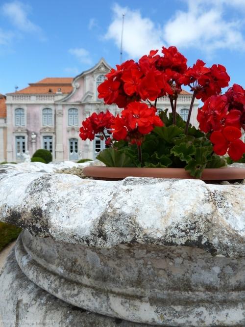 red geraniums at Queluz