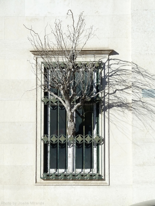 window with tree in Lisbon