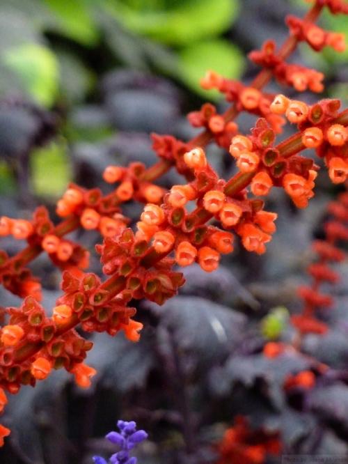 red wild flowers against dark purple background