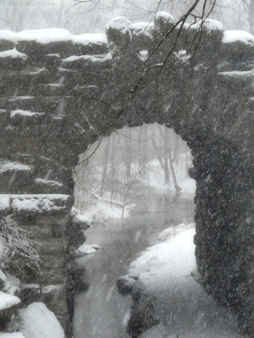 snow storm Jan 2015