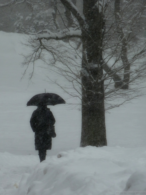 Woman in black with umbrella in the snow
