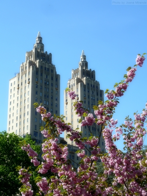 Cherry blossoms and San Remo towers