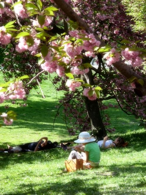 under the cherry trees