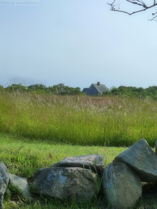 Field and house on Block Island