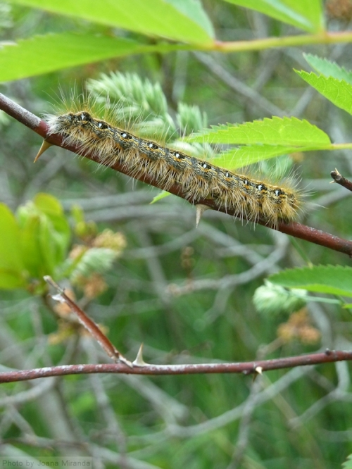 photo of catepillar