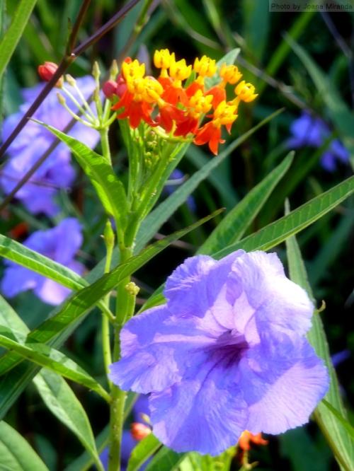 vibrant September flower garden