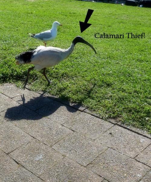 Calamari Thief