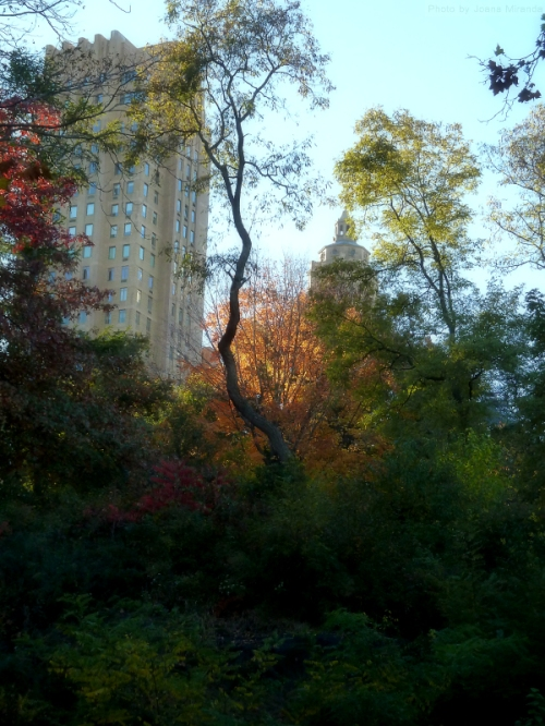 Fall colors along Central Park South
