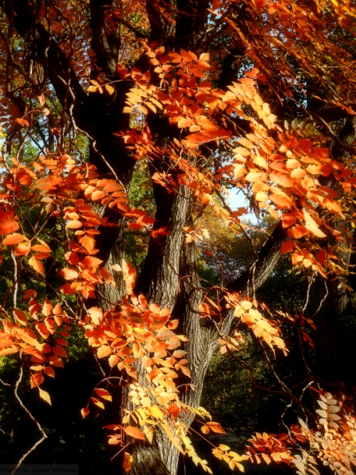 orange tree in the fall