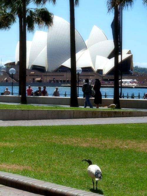 Sydney Opera House from across the quay