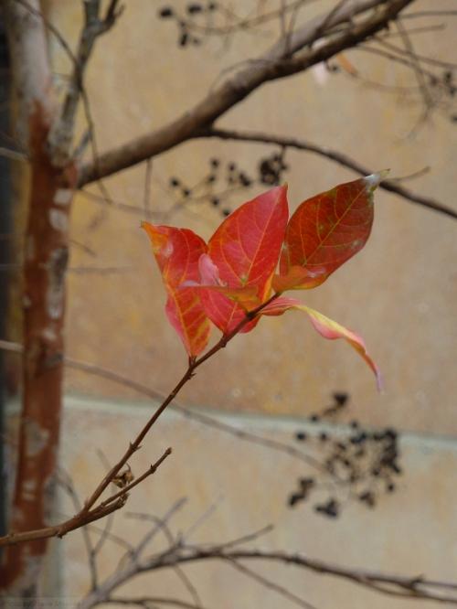 orange leaves against a beige wall