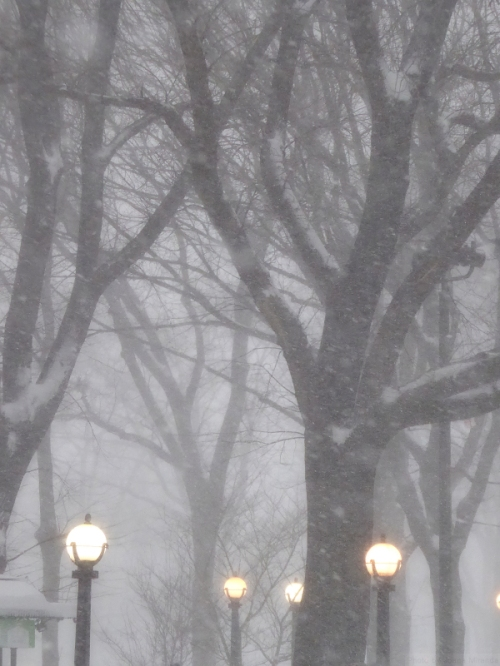 Lanterns in Central Park during Winter Storm Jonas
