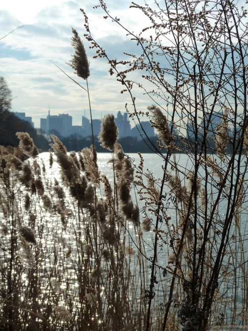 New York skyline across the reservoir