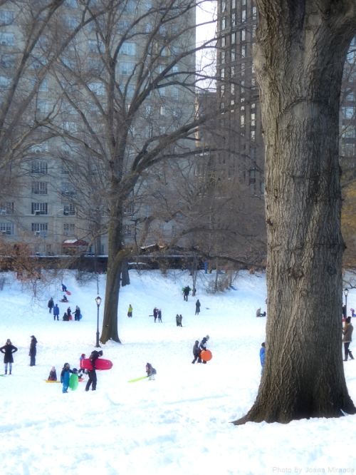 sledders in Central Park after Winter Storm Jonas