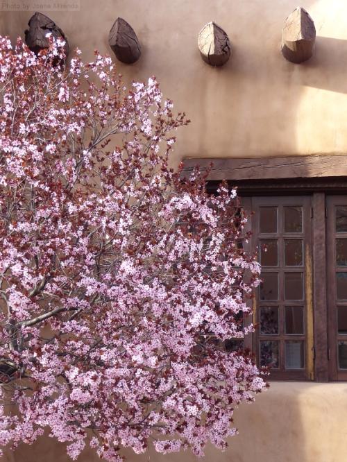 Santa Fe window and cherry tree