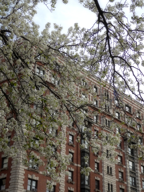 Upper West Side in the springtime
