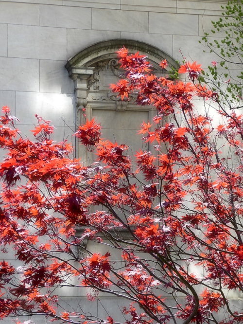 red leaves against an arched stone window